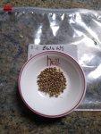 BWxNS seeds_20200606.jpg