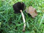 2 mushrooms 018 - Copy.jpg