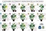 marijuana-deficiency-chart-jorge-cervantes.jpg