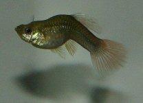 FishTB-300x217.jpg