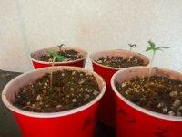 seedling1.jpg