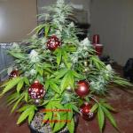 xmas weed tree.png
