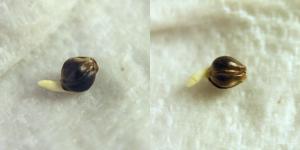 weird-seed.png