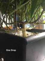 One Drop - Bubba Slush.jpg
