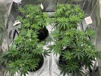 FDA5348B-3EC5-4B59-8006-6FD74A07436A.jpeg