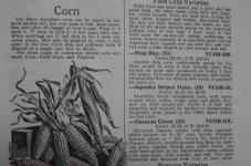 DSC_0603_corn.JPG