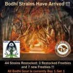 Bodhi Has Arrived.jpg
