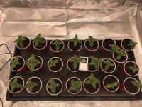 22 Seedlings.JPG