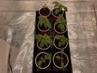 8 Seedlings.JPG