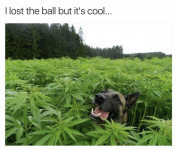 DoggyLostBall.png