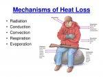 mechanisms-of-heat-loss-n.jpg