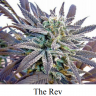 True Living Organics - The Ultimate Guide to Growing All-Natural Marijuana Indoors